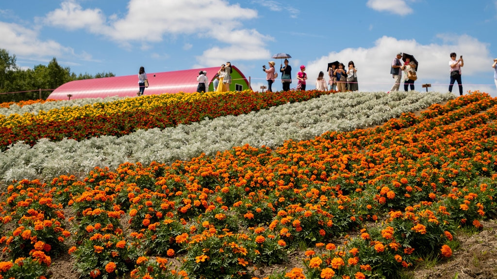 Shikisai no Oka which includes flowers and farmland as well as a small group of people