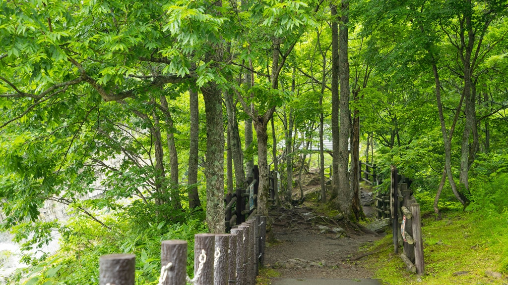 Furano featuring forest scenes