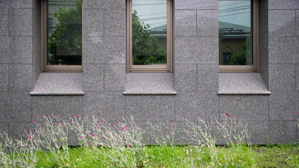 Otaru featuring wildflowers