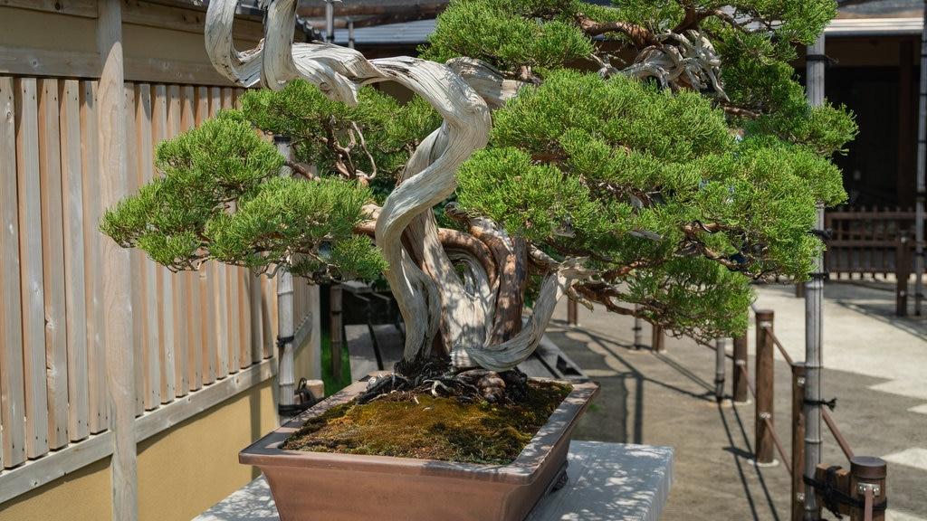 Omiya Bonsai Art Museum featuring a garden