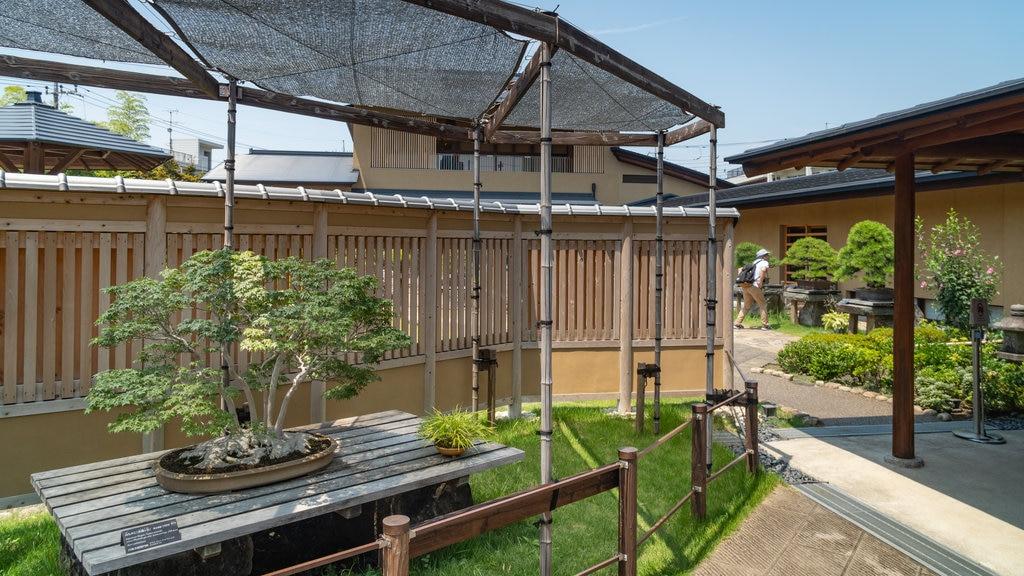 Omiya Bonsai Art Museum showing a garden