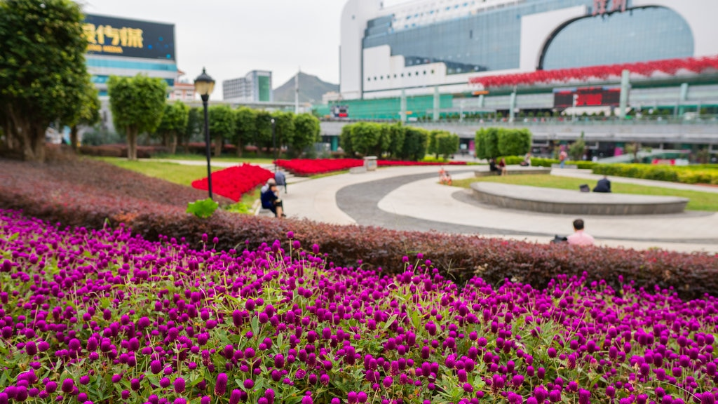 Shenzhen which includes a garden and wildflowers