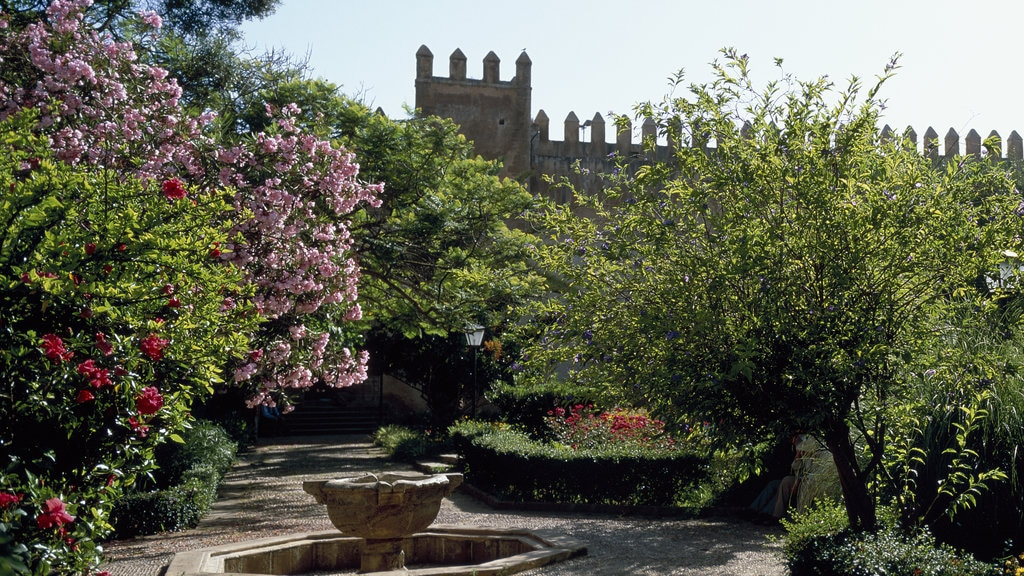 San Juan de Dios featuring a garden and wildflowers
