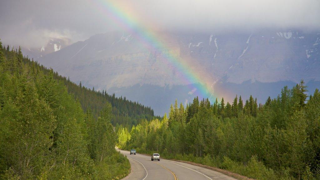 Icefields Parkway ofreciendo neblina o niebla, vistas de paisajes y escenas forestales