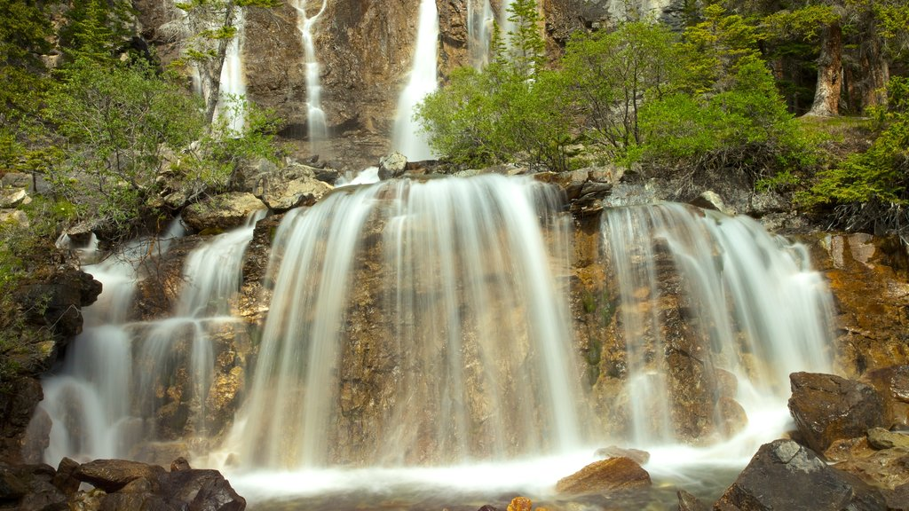 Tangle Falls which includes forests and a cascade