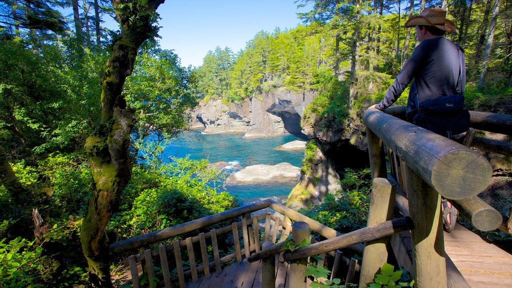Cape Flattery featuring a bay or harbor, forest scenes and a river or creek