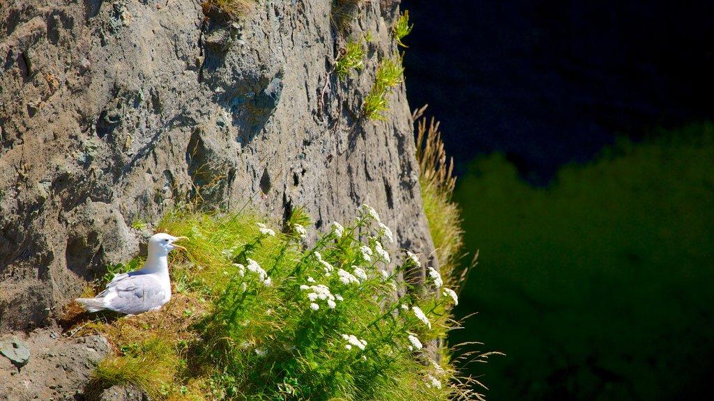 Cabo Flattery mostrando vida de las aves y flores silvestres