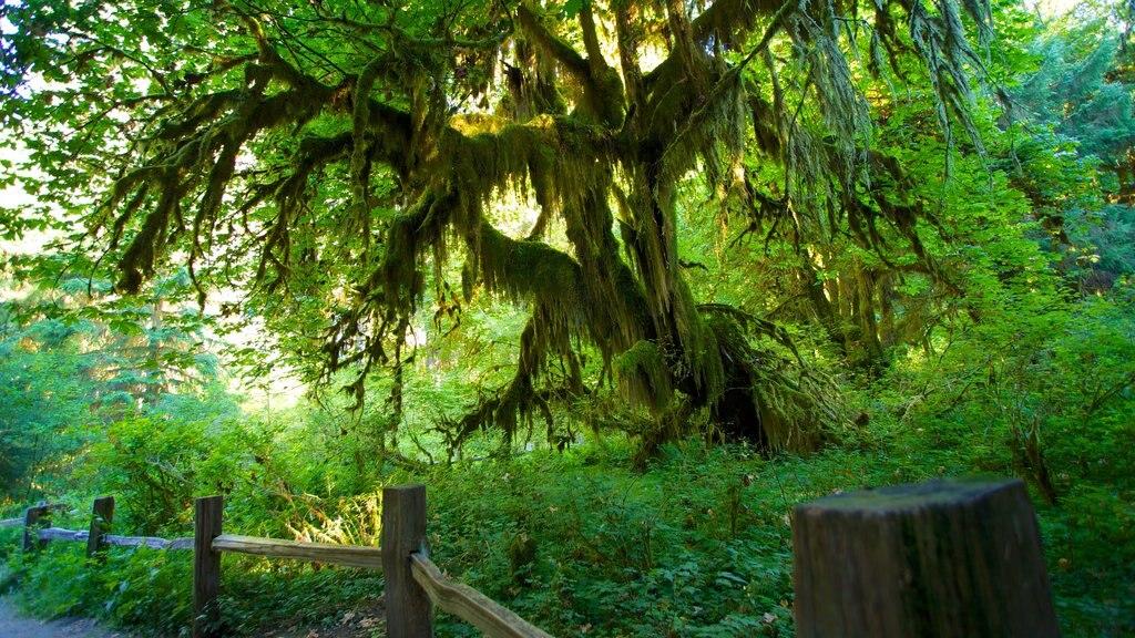 Hoh Rain Forest Visitor Center showing rainforest
