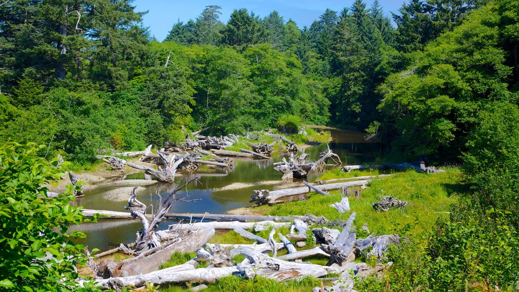 Kalaloch featuring a river or creek and forest scenes