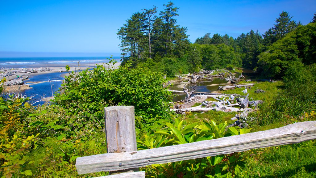 Kalaloch featuring general coastal views, a river or creek and forest scenes