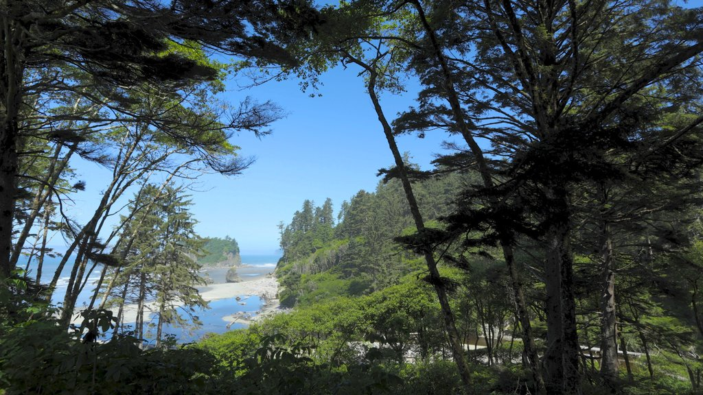Ruby Beach which includes forest scenes and general coastal views