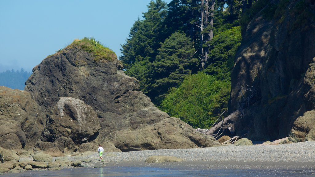 Ruby Beach showing hiking or walking, a pebble beach and tropical scenes