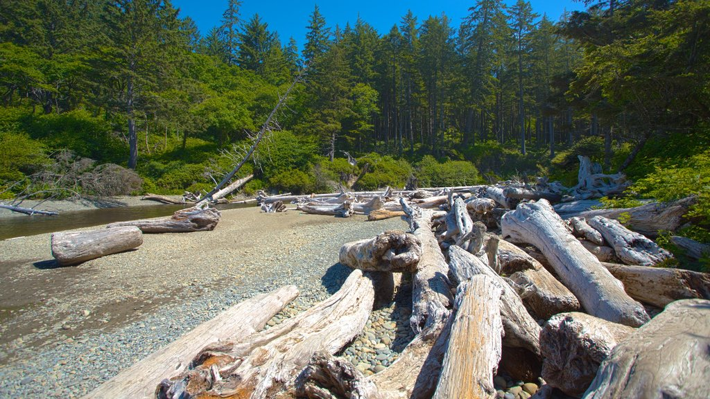 Ruby Beach which includes general coastal views and forests