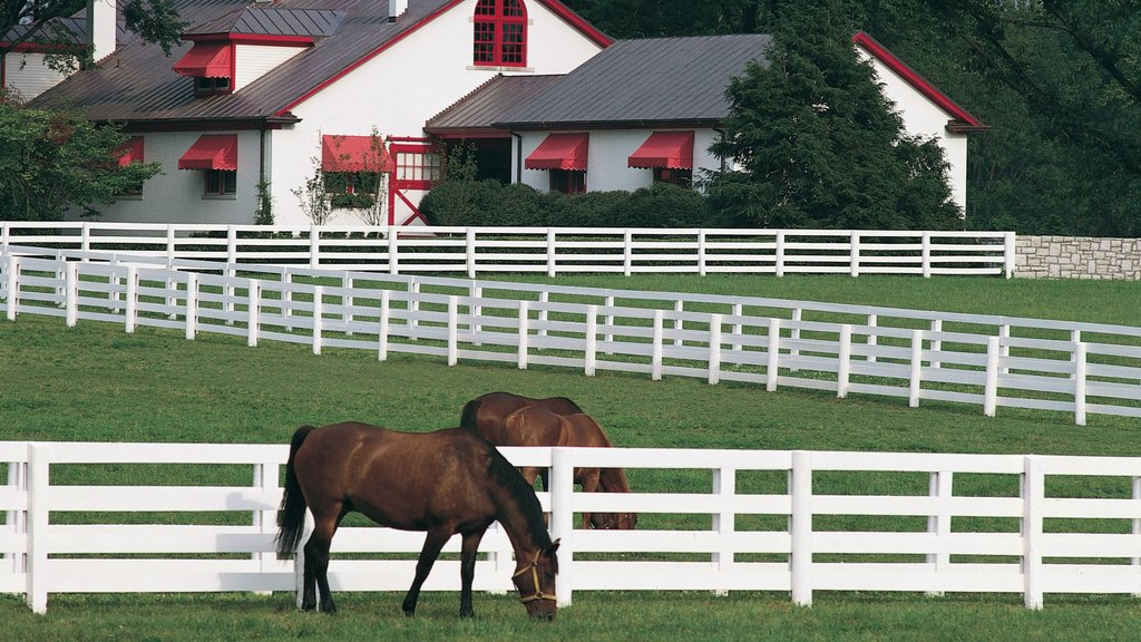 Lexington which includes horseriding and land animals