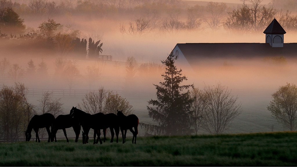 Lexington which includes mist or fog, landscape views and land animals