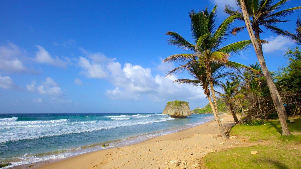 Bathsheba featuring tropical scenes, a sandy beach and landscape views