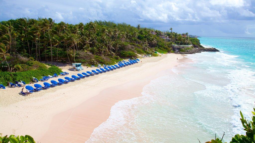 Crane Beach featuring a beach, landscape views and tropical scenes