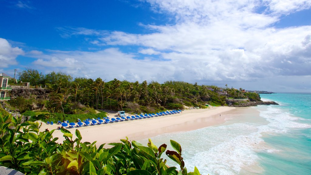 Crane Beach featuring landscape views, tropical scenes and a sandy beach