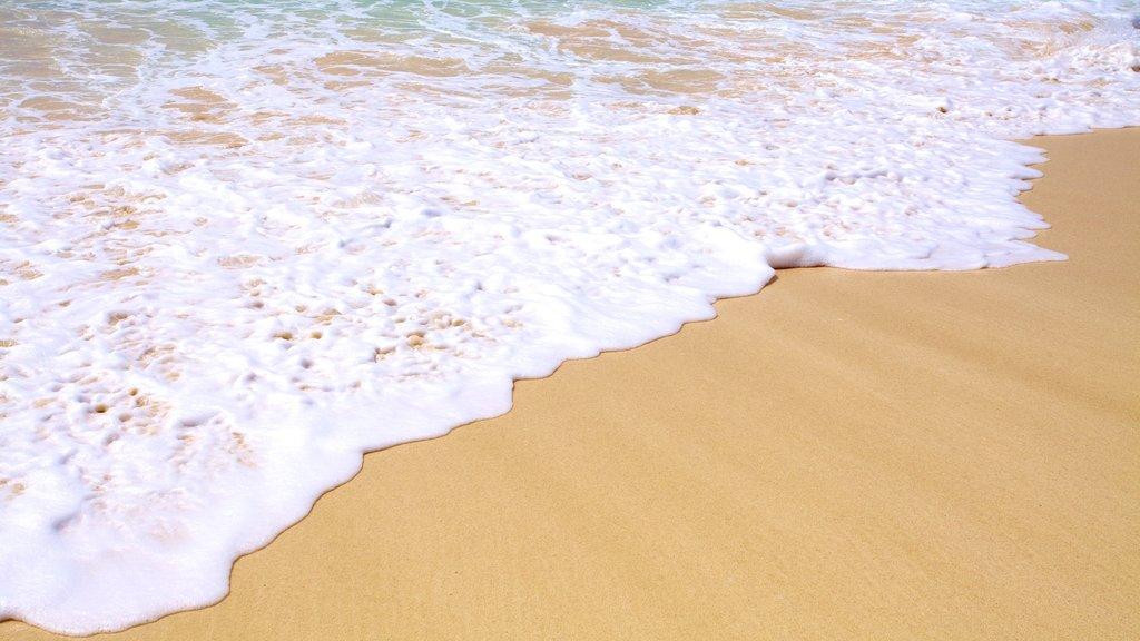 Crane Beach which includes landscape views and a beach