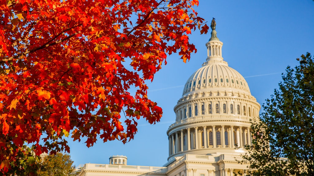 United States Capitol showing heritage architecture, an administrative buidling and fall colors