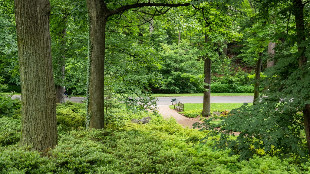 New York Botanical Gardens which includes a garden