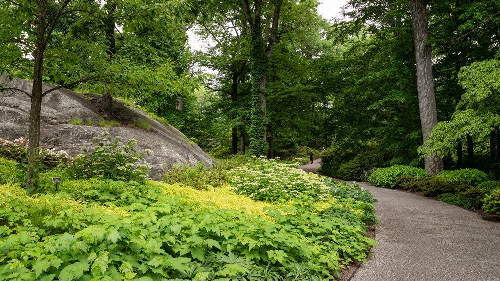 New York Botanical Gardens featuring a park