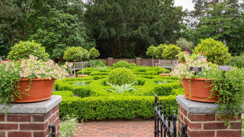 New York Botanical Gardens showing a garden