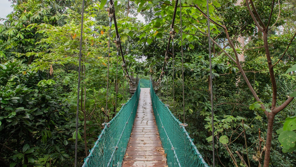 Bukit Nanas Forest Reserve featuring a suspension bridge or treetop walkway and forests