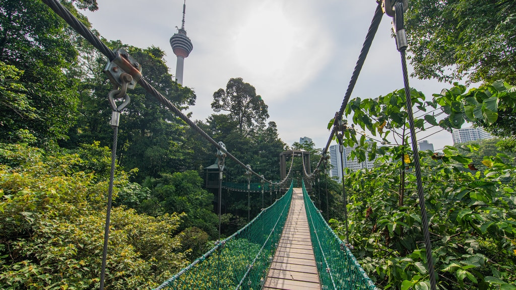 Bukit Nanas Forest Reserve showing a suspension bridge or treetop walkway and forest scenes