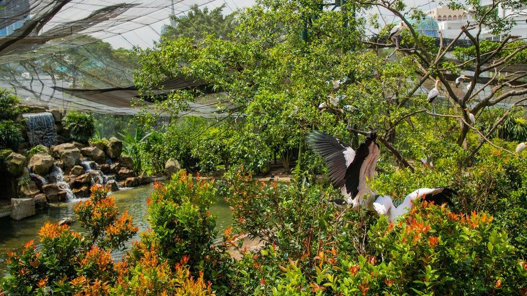 Kuala Lumpur Bird Park showing a garden, wildflowers and bird life
