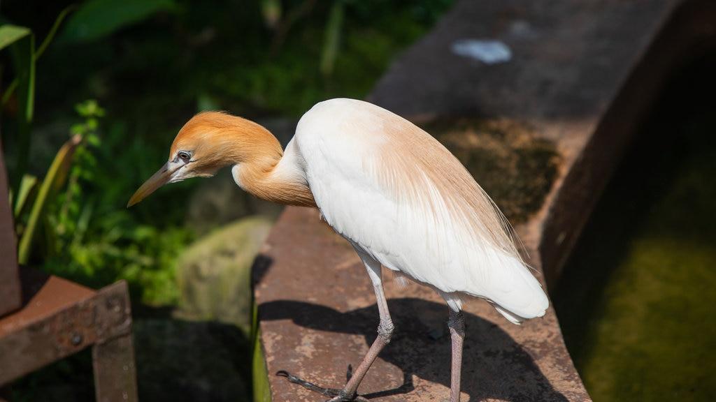 Kuala Lumpur Bird Park showing bird life
