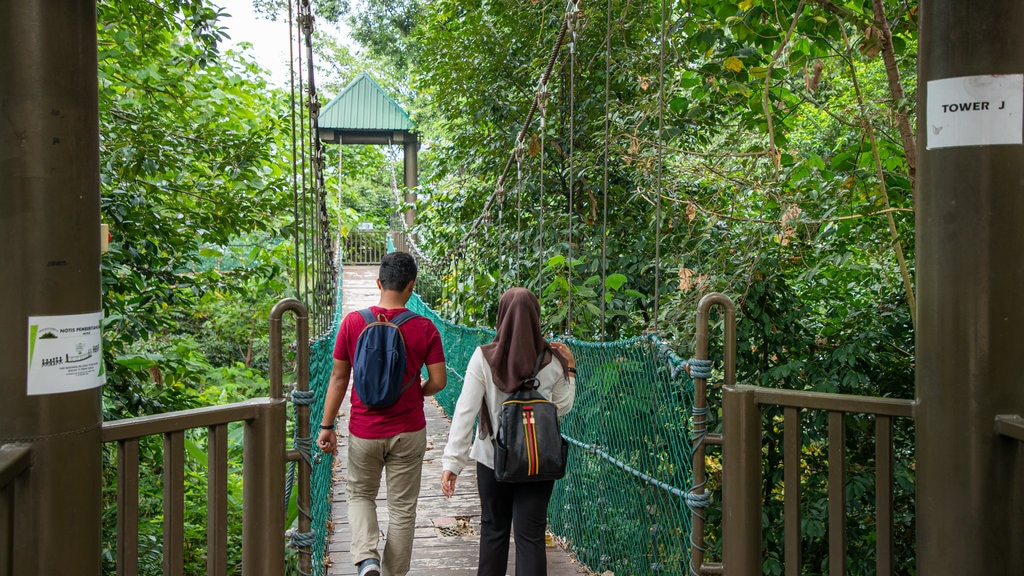 Bukit Nanas Forest Reserve showing a garden and a suspension bridge or treetop walkway as well as a couple