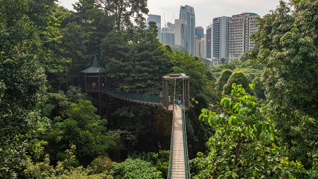 Bukit Nanas Forest Reserve showing a city and a suspension bridge or treetop walkway