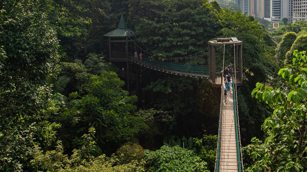 Bukit Nanas Forest Reserve featuring a suspension bridge or treetop walkway as well as a small group of people