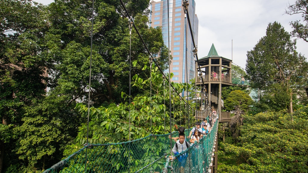 Bukit Nanas Forest Reserve showing a suspension bridge or treetop walkway as well as a small group of people