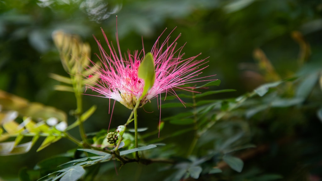 Perdana Botanical Garden featuring wildflowers