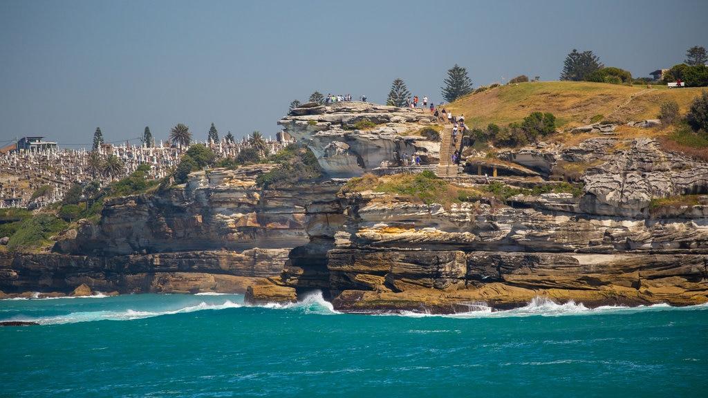 Bondi Beach showing general coastal views and rugged coastline