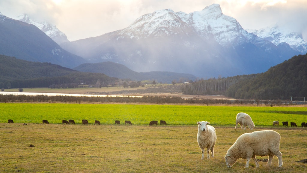 Glenorchy which includes a sunset, land animals and farmland