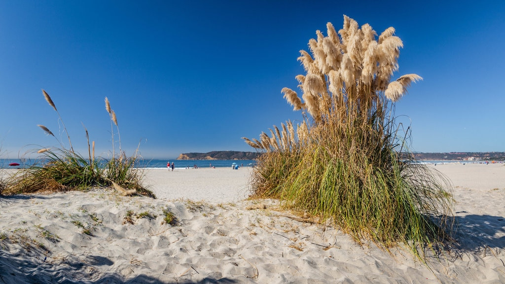 Coronado Beach which includes a sandy beach and wildflowers