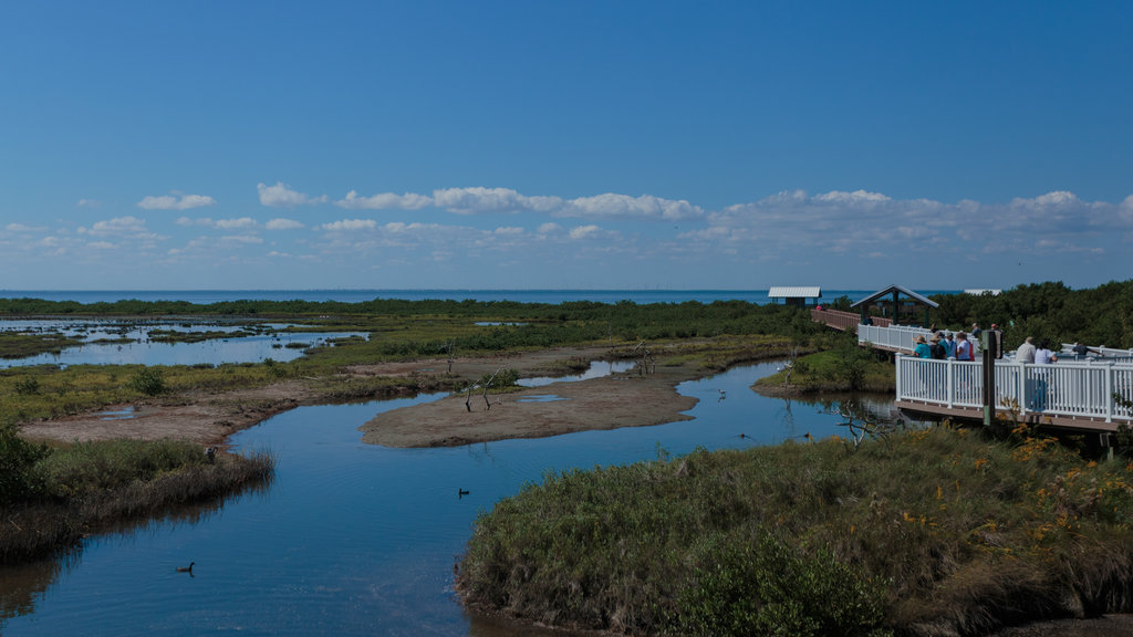 South Padre Island Birding and Nature Center which includes landscape views and wetlands
