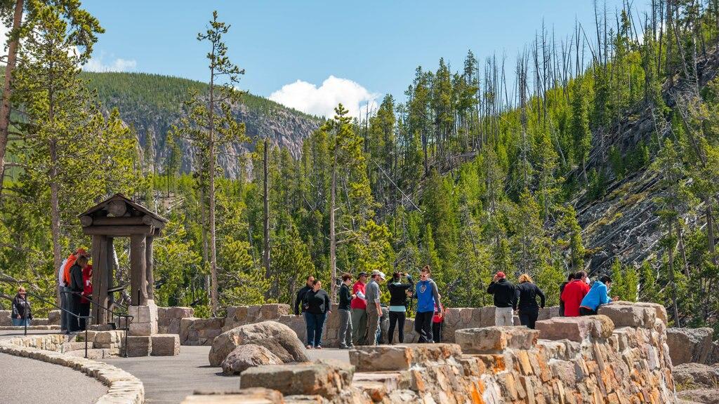Cascadas Gibbon que incluye escenas tranquilas y vistas y también un pequeño grupo de personas