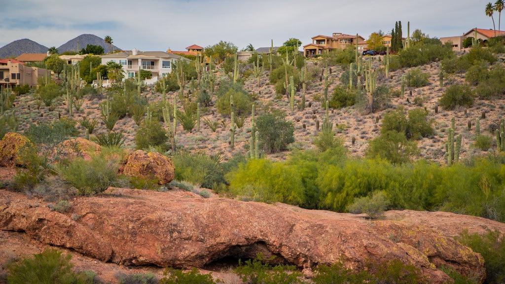 Fountain Hills Botanical Garden featuring desert views