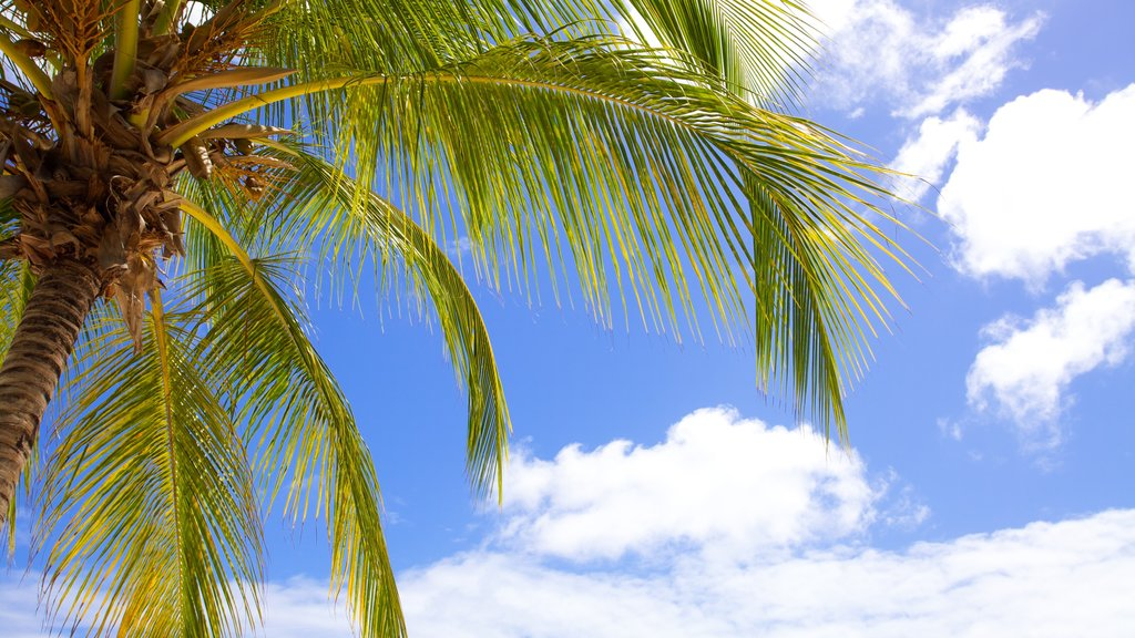 Dover Beach which includes tropical scenes and general coastal views