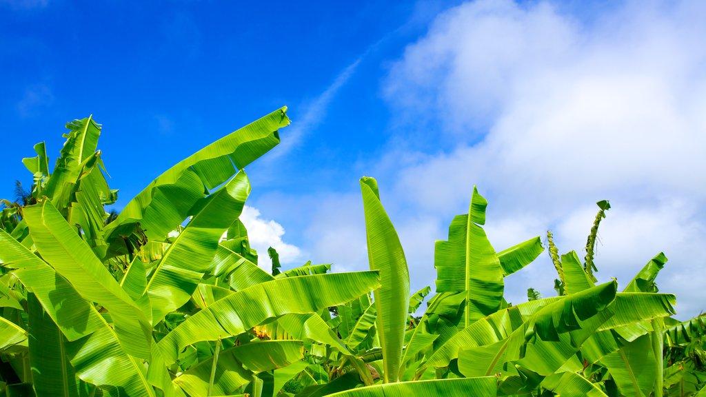Barbados Wildlife Reserve featuring tropical scenes