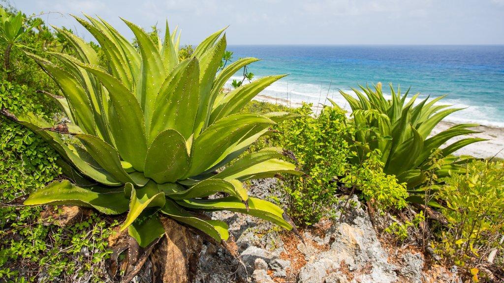 Islas Caimán ofreciendo vistas generales de la costa, vistas de paisajes y escenas tropicales