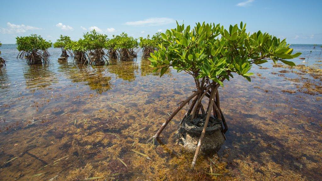 Islas Caimán mostrando manglares y vistas generales de la costa