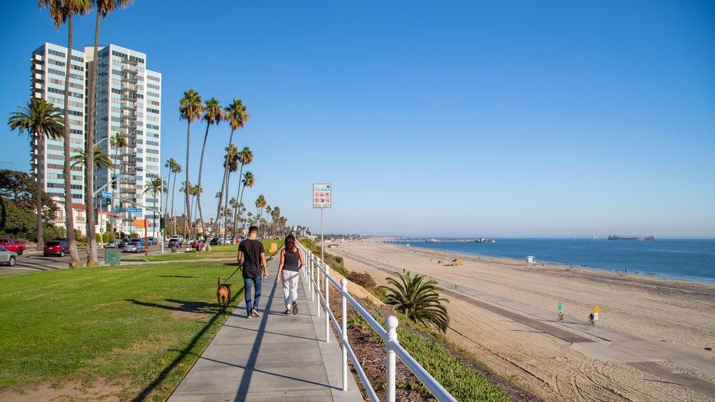 City Beach which includes general coastal views, a sandy beach and cuddly or friendly animals