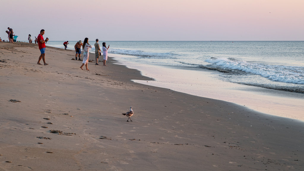 Virginia Beach featuring general coastal views, bird life and a sunset