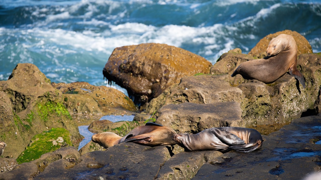 Animal Pictures View Images Of La Jolla