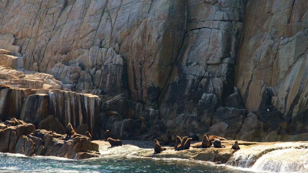 Freycinet National Park showing land animals, marine life and a river or creek